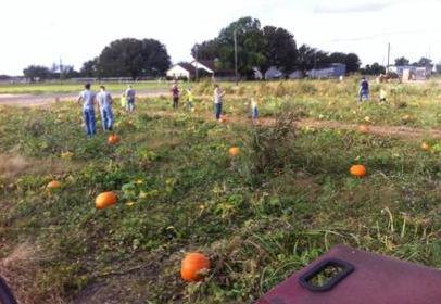 Take a stoll through te pumpkin patch