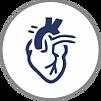 Cardiology & Cardiothoracic Surgery.png