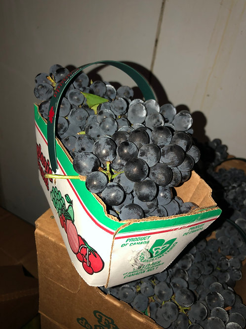 concord (purple) grapes