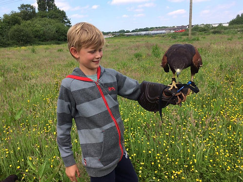 Young Falconers Club- 7th & 8th November 2020