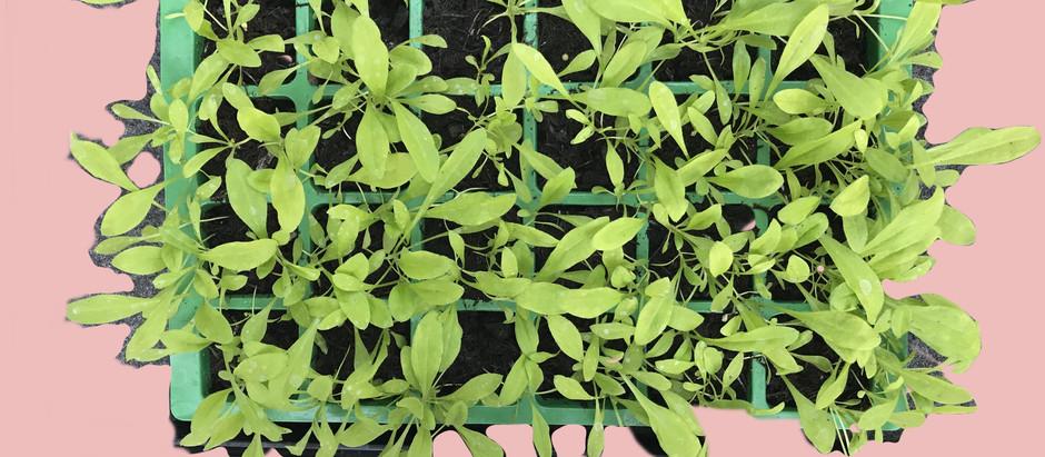 Growing your own cut flower garden. Part one