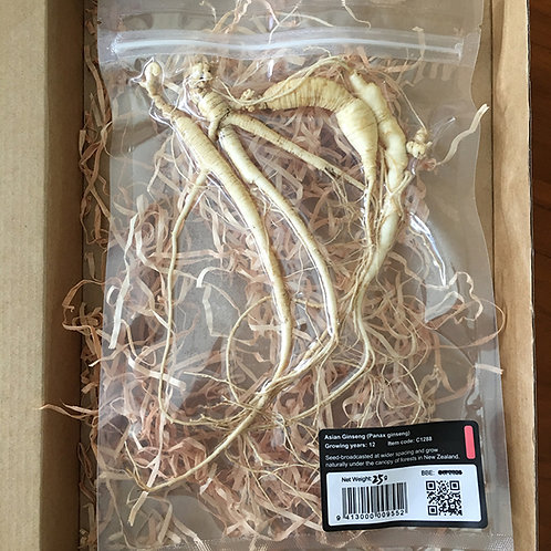 Fresh Wild Grown Panax Ginseng Root (age 10+ Years)