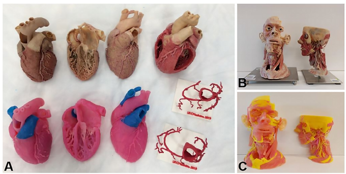 New paper published in Anatomical Sciences Education