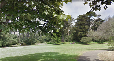 Peacock-Meadow-in-Golden-Gate-Park.png