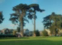 Balboa-Park.png