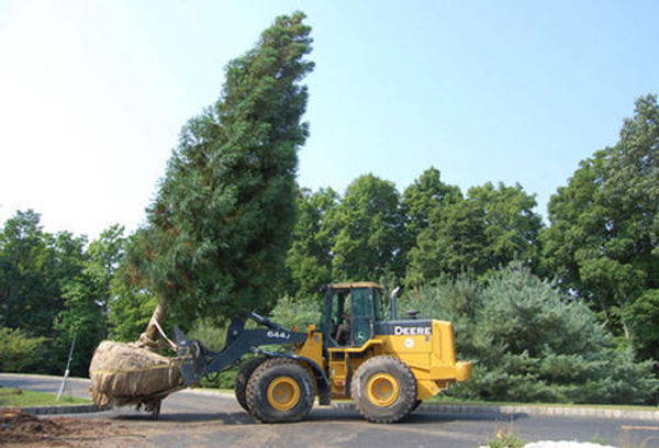 tree-transplantation-500x500.jpg