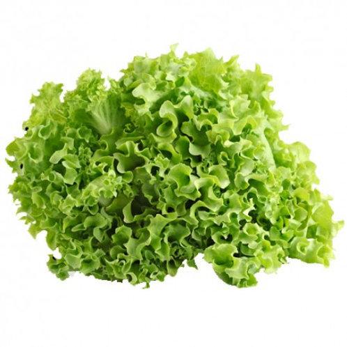 Organic Green Ice Lettuce per Kilo