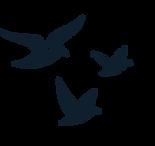 thumbnail_FARI - Oiseaux.png