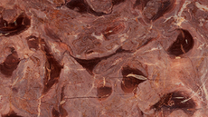 fossil-brown.png