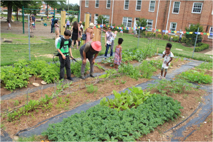 Students nurture the soil with biodynamic preparations.
