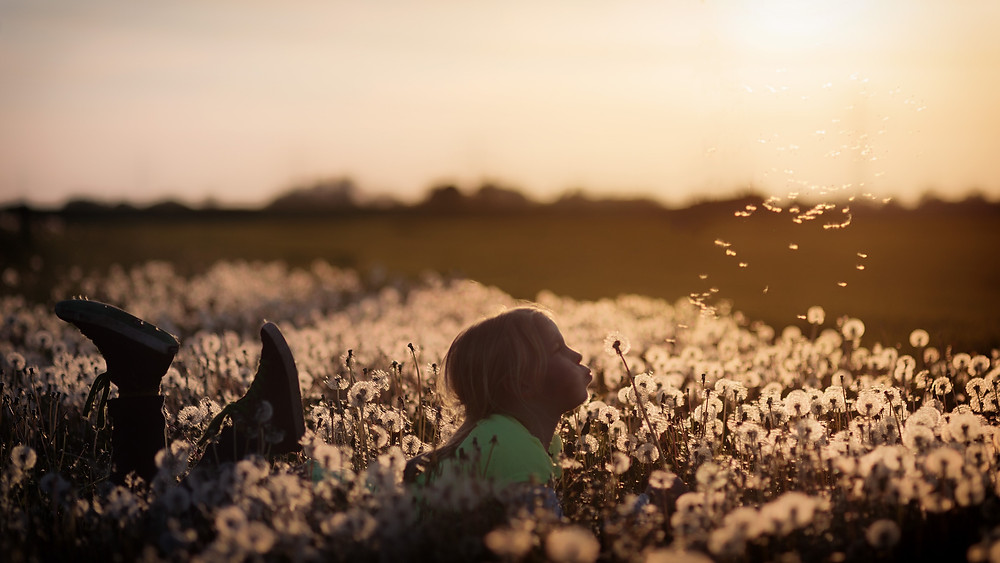 Child blowing dandelions in a field (photo credit Johannes Plenio)