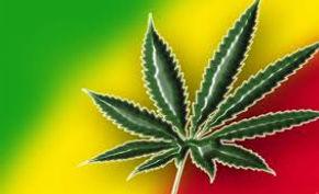 Marijuana Plant news.jpg