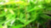 Marijuana-Plants-in-Port-Hueneme.jpg