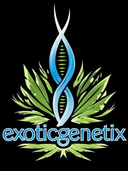 EXOTIC GENETIX - TRUFFLES 3.5G (21.92%)
