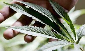 Ventura-Cannabis-Deliveries.jpg