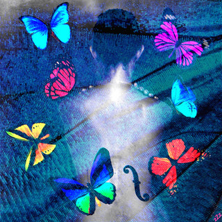 Dos & Papillons