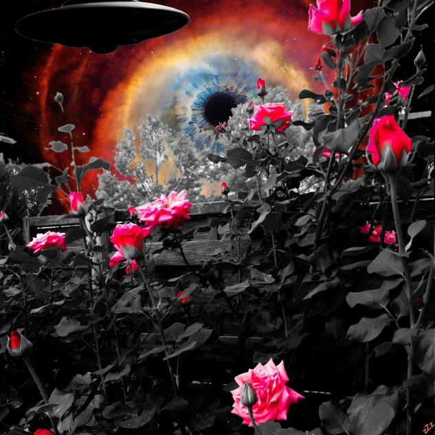 Roses de Mars