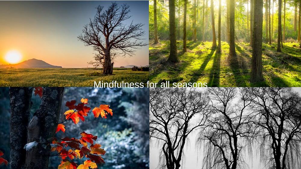 mariposa coaching mindfulness for all seasons