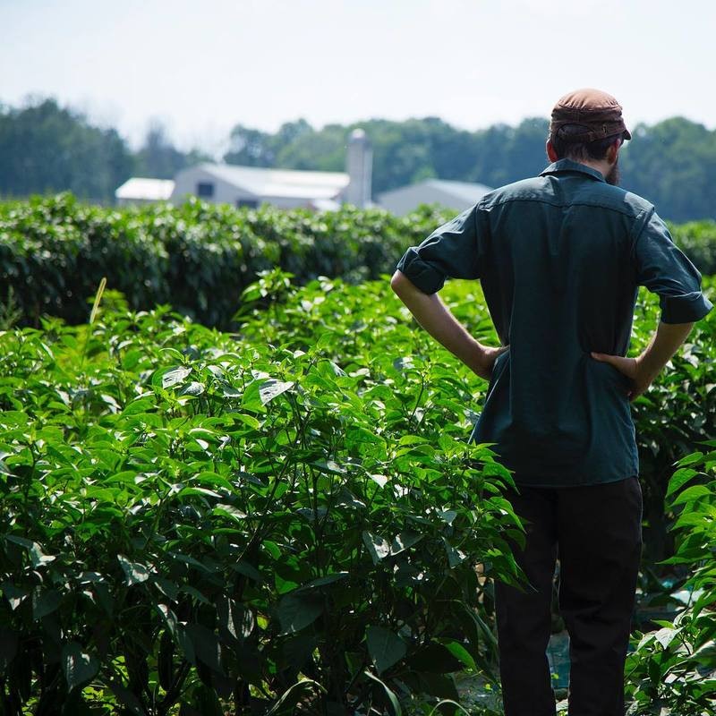 Farmer at Clarion River Organics looks over his field