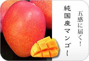 立夏のフルーツキャンペーン