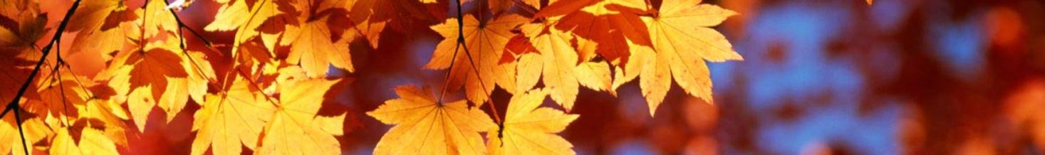 leaves4_edited.jpg