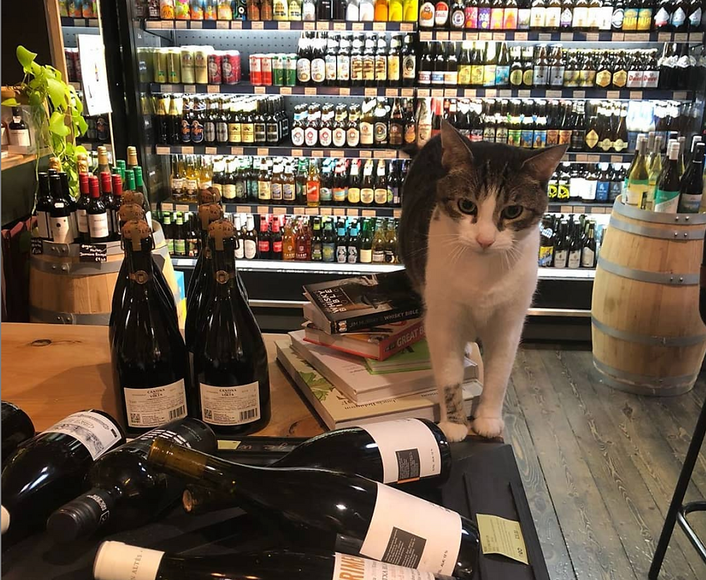 Asbo the cat helping with your wine selection
