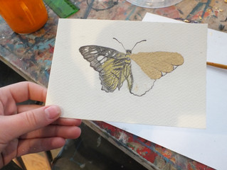 Butterflies coming alive in the MasterClass