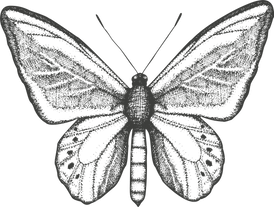 Butterfly and Bloom Logo_Butterfly Icon.