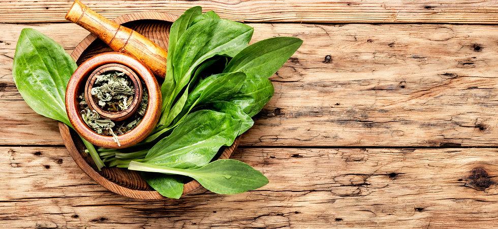 plantain-valuable-medicinal-plants.jpg