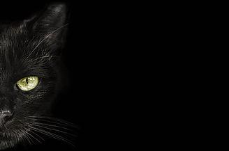 Hund Katze.jpg