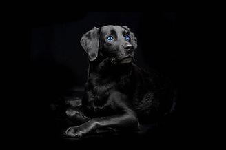 Hund Katze3.jpg