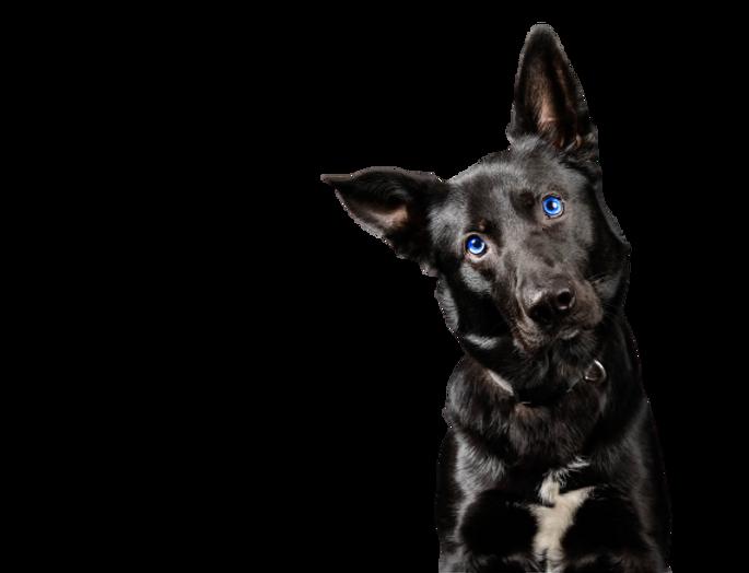 schwarzer Hund_ohne Hintergrund.png