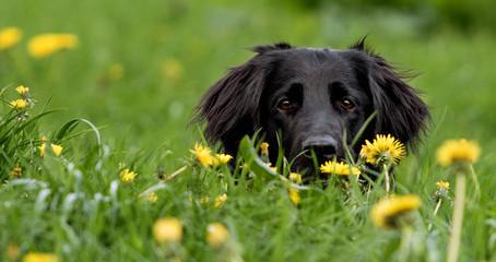 Hilfe es juckt! Hat mein Hund eine Futtermittelallergie?  Tierarzt Mag. Klaus Fischl klärt auf:
