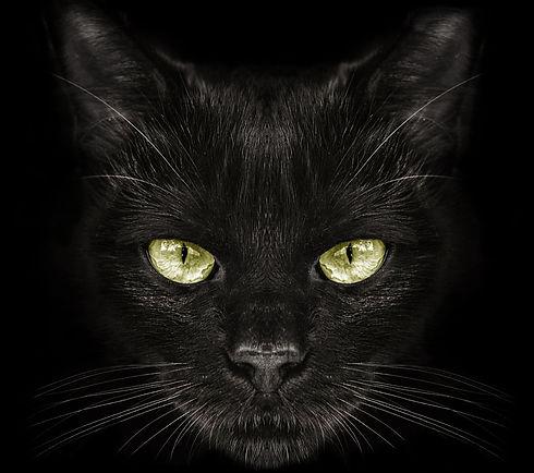Katze_Gelbe Augen.jpg