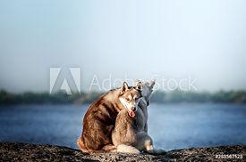 AdobeStock_288567528_Preview.jpeg