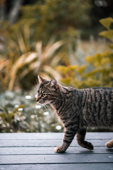 entoVITAL-CAT-1.jpg