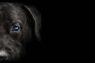 Hund Katze2_edited.jpg