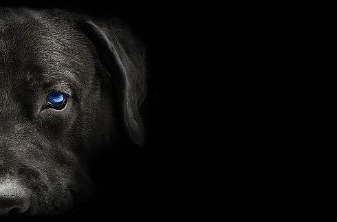 Hundekopf_682x450px