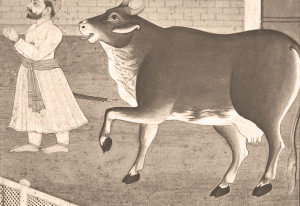 Protection of Cows - Guru Hargobind and Guru Gobind Singh