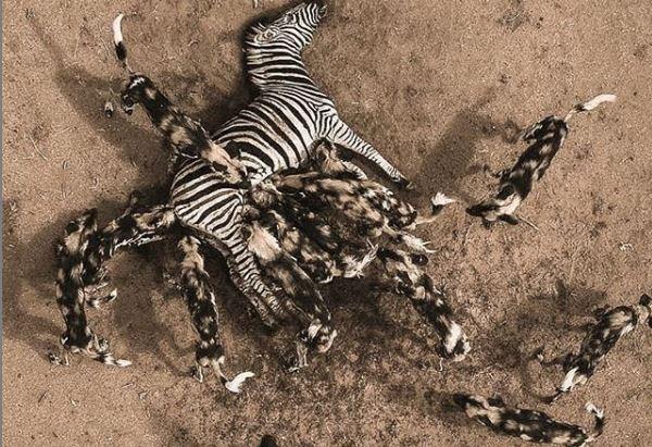 Deathless - Gobind Gita