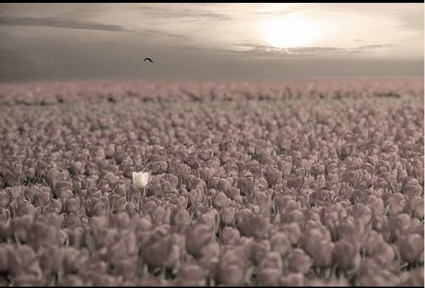 Desirelessness - Sri Sarbloh Guru Granth Sahib Ji