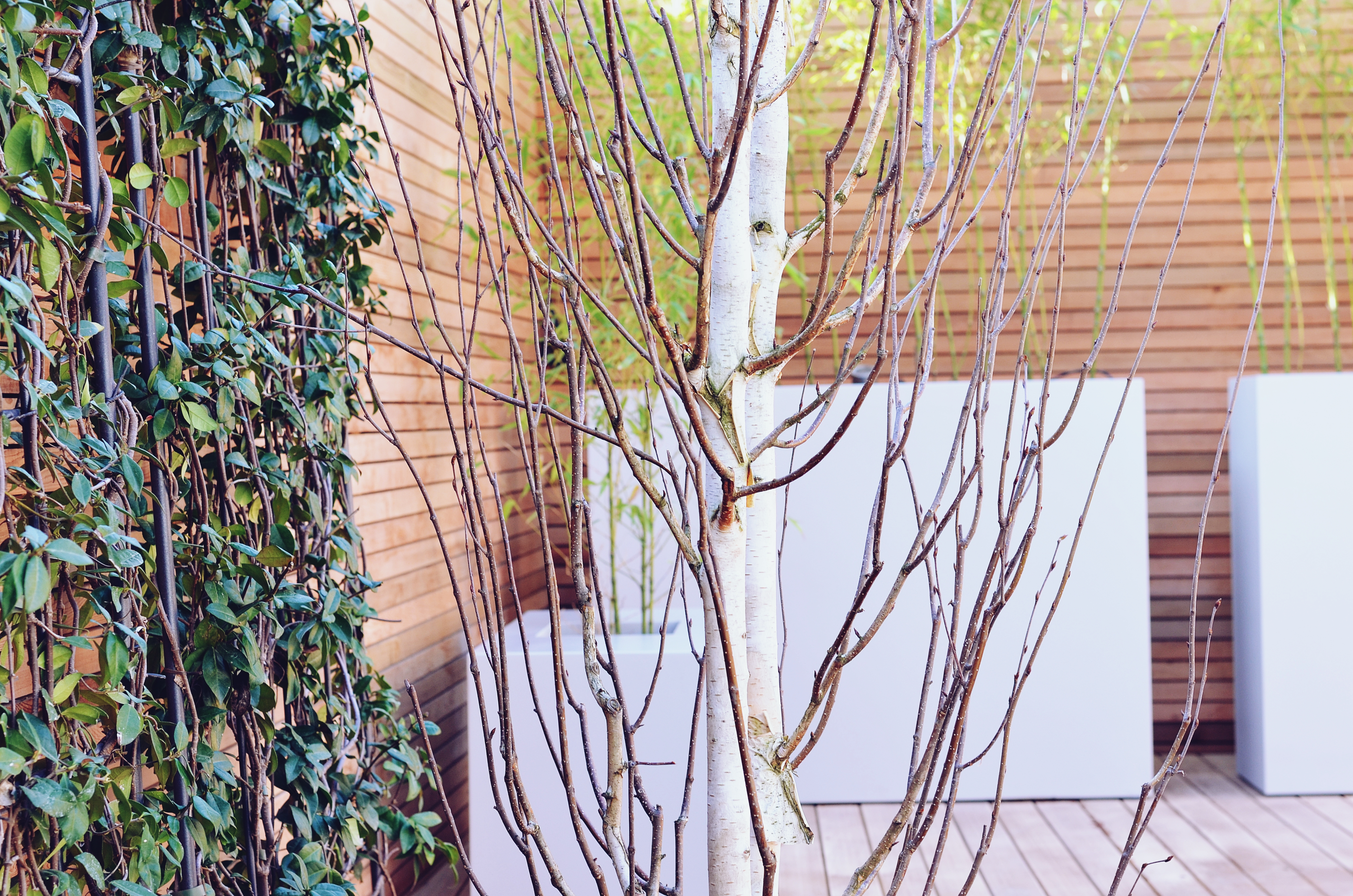 Garden builders Anewgarden Modern contemporary style London silver birch