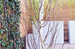 Garden builders Anewgarden Modern contemporary style London silver birch