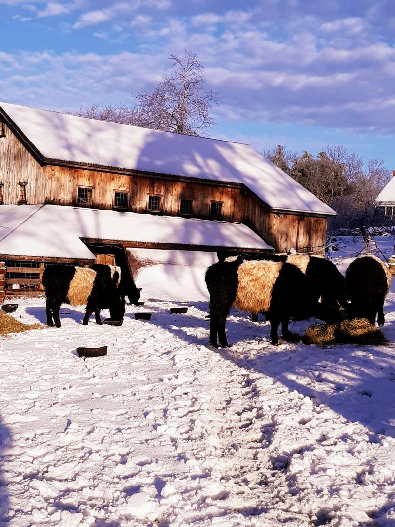 Belties and Barn