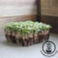 basic-sald-mix-greens-wm_700_800x.jpg