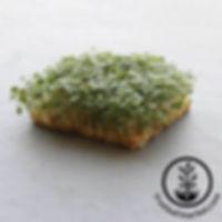 arugula-hydro-microgreens-wm_700_800x.jp