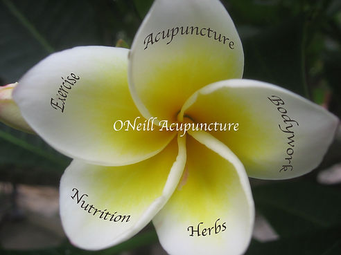 Oneill Acupuncture, Buffalo NY, Oriental Medicine Acupuncture, TuiNa, QiGong, Nutrition, Herbs, Buffalo NY