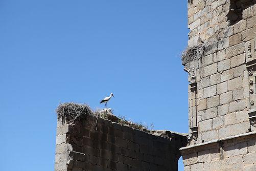 la cigüe?ña en el castillo.jpg