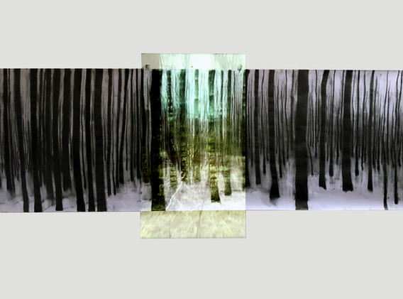 forest Project2.jpg
