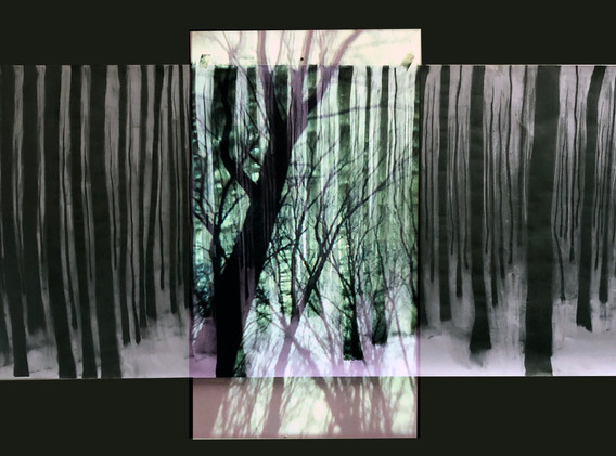 forest Project10.jpg
